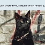 17   Реакция кота