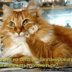 03   Кошачьи мечты