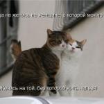 06   Женидьба кошек