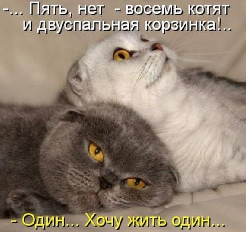 http://www.leonids-info.ru/wp-content/uploads/2015/12/16.jpg