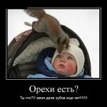 04   Орехи есть