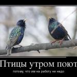 12   Птицы поют