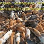 14   Упал ветеринар