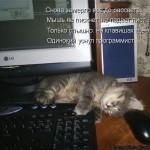 5   Одинокий программист