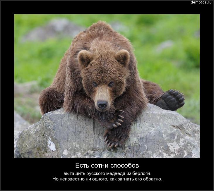 5   Русский медведь