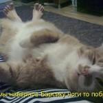 9   Побрили ноги