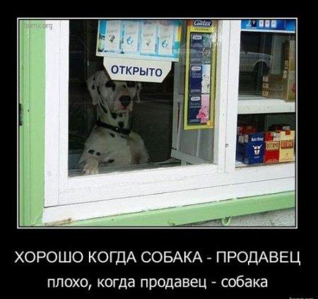 13   О собаках и продавцах