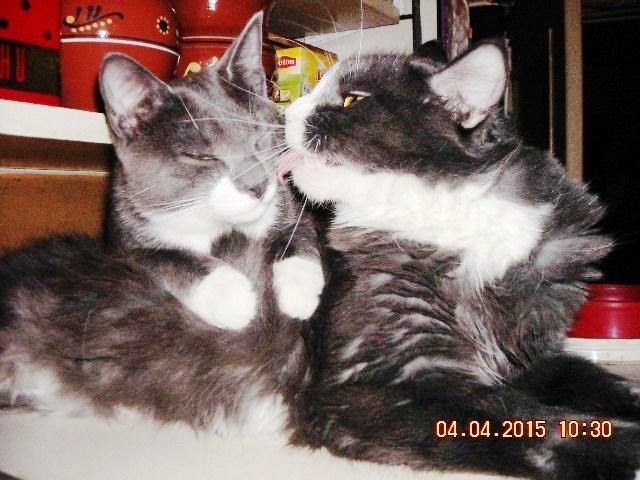 03   Тимка и Бобо