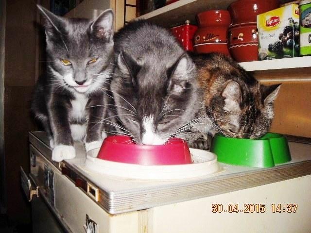 05   Кошачья трапеза