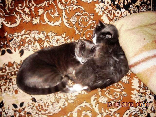 06   Тимка и Бобо(похрапушечки)