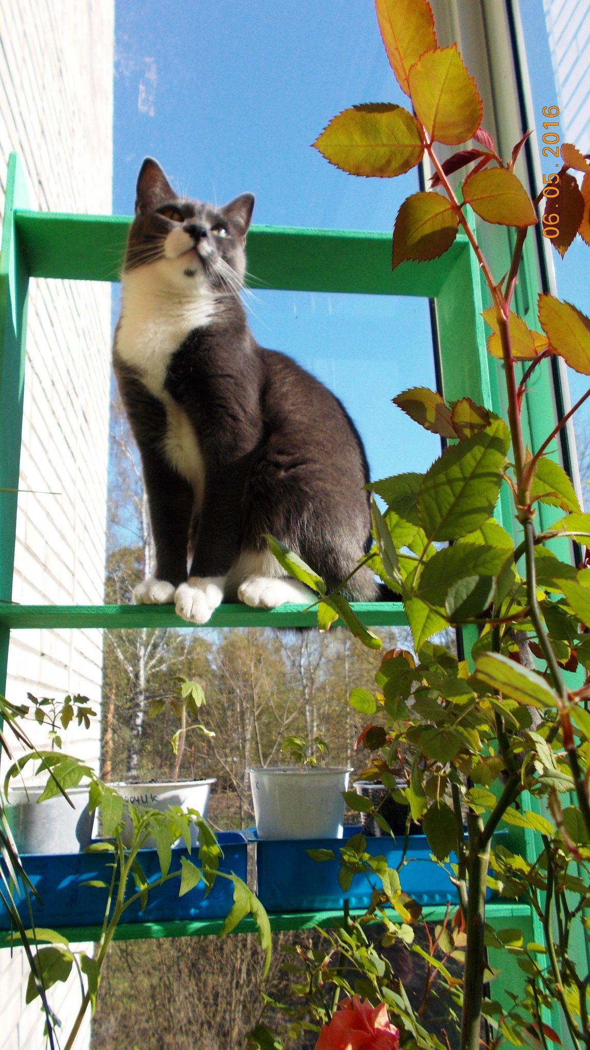 12   Тимка на балконе