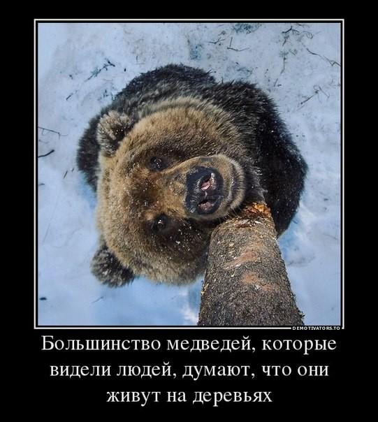 12   Большинство медведей думает