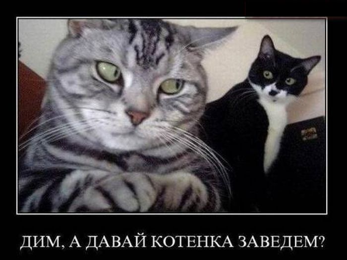 Давай котёнка заведём