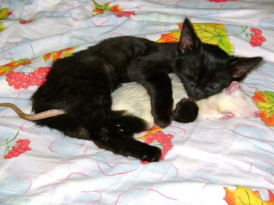 Догнал,поймал, умаялся и уснули вместе