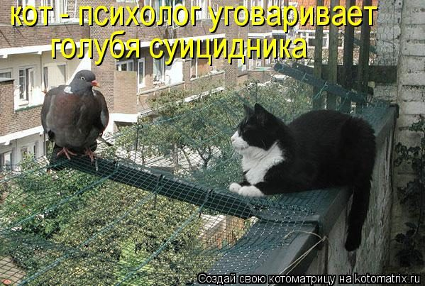 09   Кот психолог