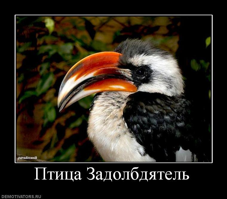 Птица задолбдятел