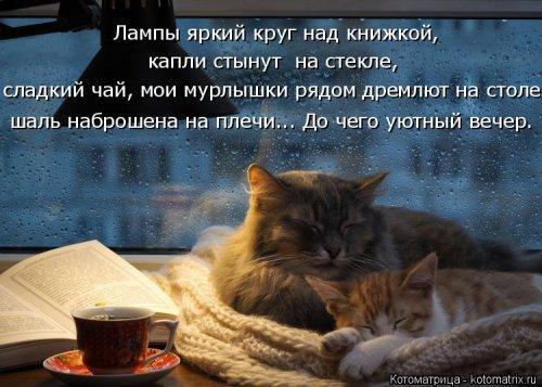 Уютный вечер