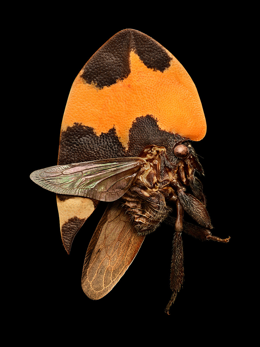 an investigation into the nature and existence of the cicada insect The most common cause of itching is a primary skin disease such as eczema, urticaria, lichen planus, psoriasis, dermatitis herpetiformis, insect bites and scabies systemic causes of itch include pregnancy, chronic renal failure, cholestasis, thyroid dysfunction, haematological disorders, iron deficiency and internal malignancy [6].