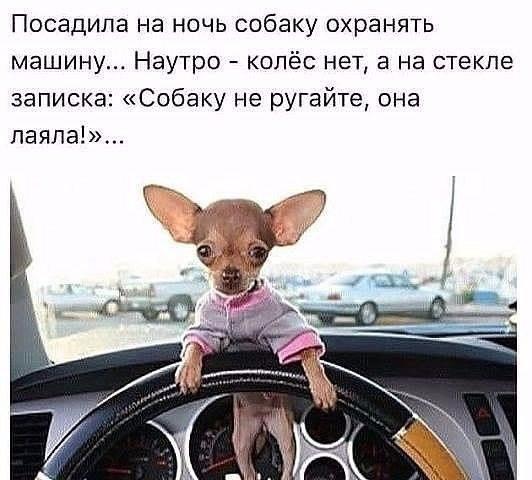http://www.leonids-info.ru/wp-content/uploads/2017/03/%D1%81%D0%BE%D0%B1%D0%B0%D0%BA%D1%83-%D0%BD%D0%B5-%D1%80%D1%83%D0%B3%D0%B0%D0%B9%D1%82%D0%B5.jpg